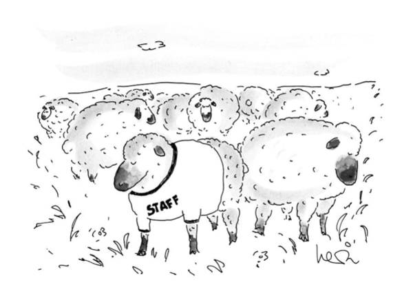 Herd Drawing - New Yorker October 21st, 1991 by Arnie Levin