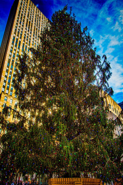 Photograph - New York's Holiday Tree by Chris Lord