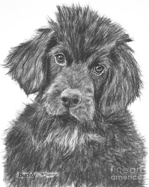 Art Print featuring the drawing Newfoundland Puppy Sketch by Kate Sumners