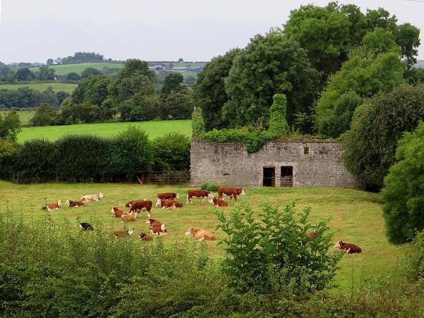 Photograph - Newgrange Farm by Keith Stokes