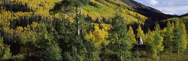 Peacefulness Photograph - Newlywed Couple In A Forest, Aspen by Panoramic Images