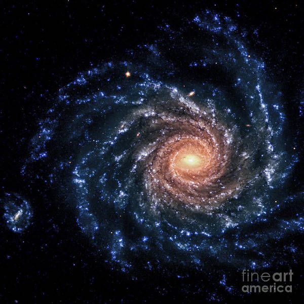 Photograph - Ngc 1232-spiral Galaxy-optical by Science Source