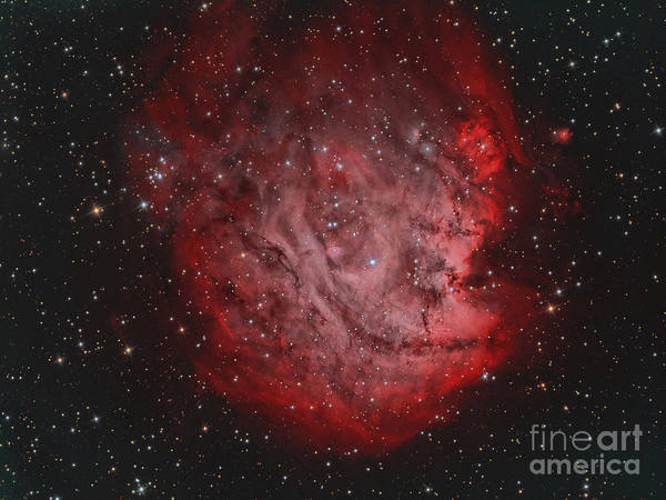 Photograph - Ngc 2174, The Monkey Head Nebula by Reinhold Wittich