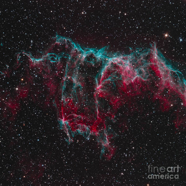 Photograph - Ngc 6995, The Bat Nebula by Bob Fera