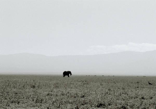 Photograph - Ngorongoro Crater by Shaun Higson