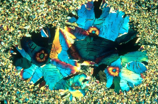 Photograph - Niacin Crystal by Perennou Nuridsany