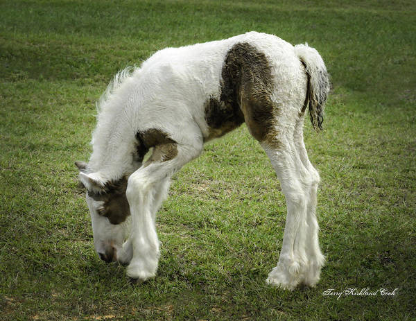 Photograph - Nibbling Grass With Style by Terry Kirkland Cook