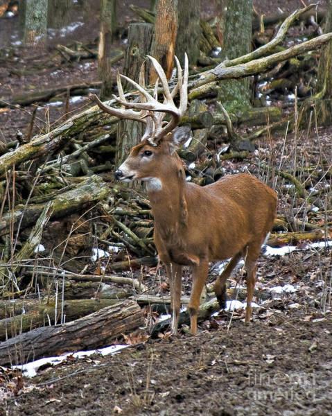 Photograph - Nice Buck by Ronald Lutz