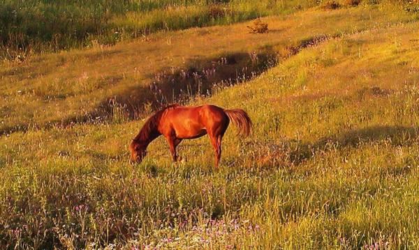 Wall Art - Photograph - Nice Horse by Fouzi Taleb