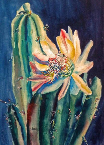 Painting - Night Blooming Cactus by Carolyn Jarvis