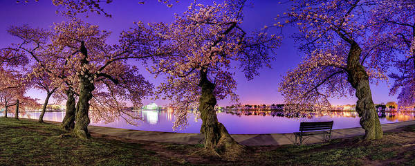 Photograph - Night Blossoms 2014 by Metro DC Photography