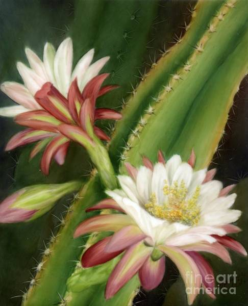 Painting - Night Cereus by Summer Celeste