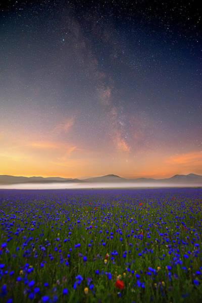 Milky Way Photograph - Night Flowers by Roberto Marchegiani