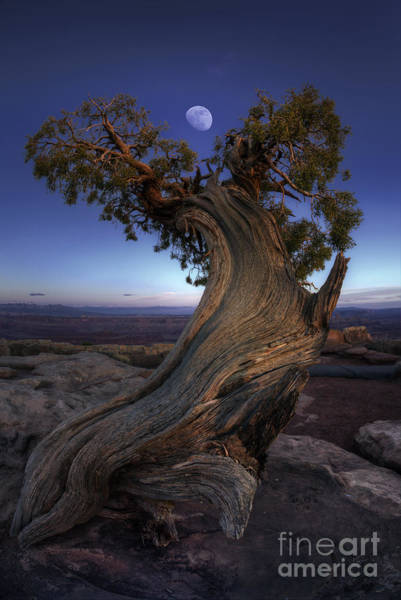 Canyonlands National Park Photograph - Night Guardian Of The Valley by Marco Crupi