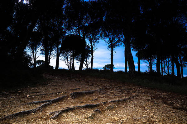 Photograph - Night In The Forest by Edgar Laureano