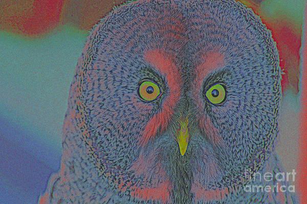 Night Owl Art Print