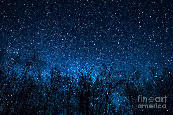 Photograph - Night Stars by Lori Dobbs