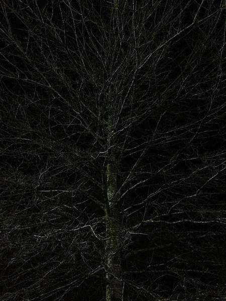 Photograph - Night Tree by Joseph Yarbrough