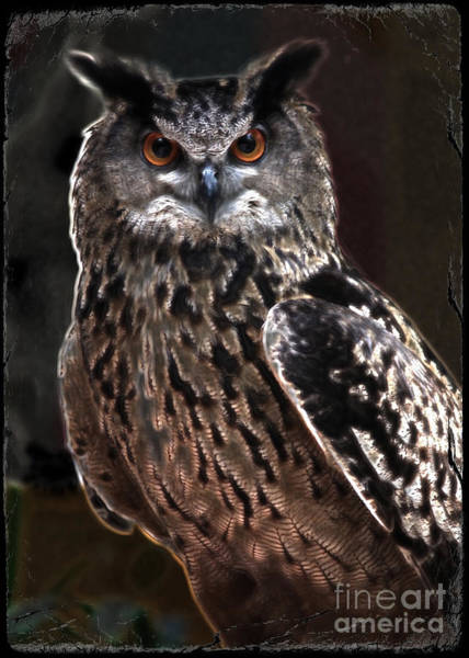 Bird Watching Digital Art - Night Watchman by Carol Groenen