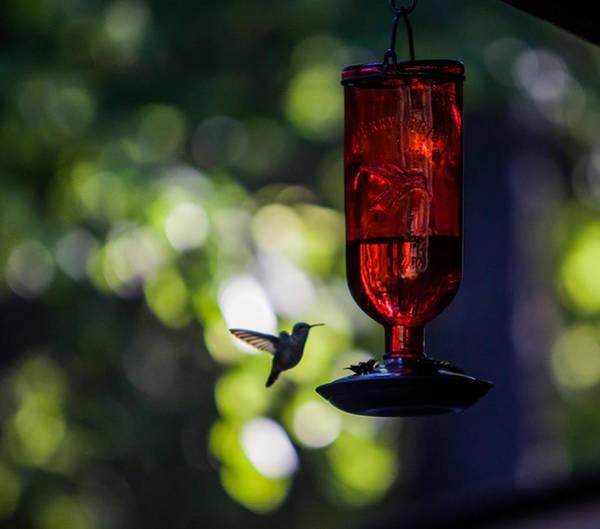Hummingbird Feeder Photograph - Nightcap by Aaron Aldrich