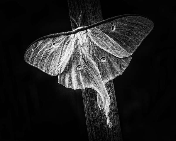 Moth Photograph - Nightlife by Susan Capuano