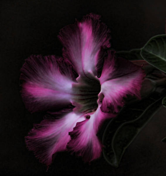 Mixed Media - Nightly Glow by Pamela Walton