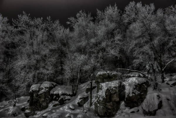 Photograph - Nighttime Snow Flocked Trees by Dale Kauzlaric