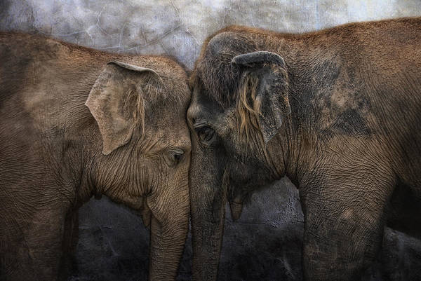 Pair Photograph - Nighty Night Darling by Joachim G Pinkawa