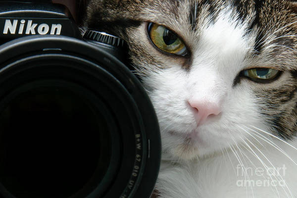 Photograph - Nikon Kitty by Andee Design
