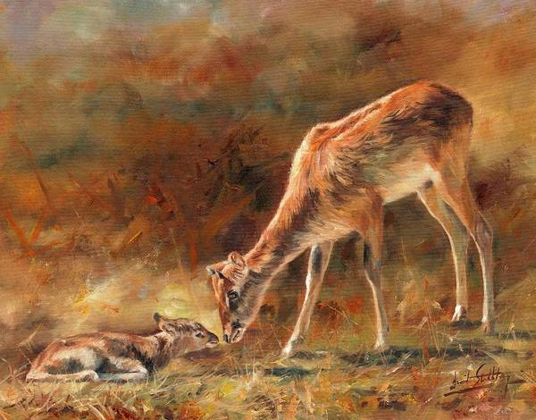 Nile Painting - Nile Lechwe And Newborn by David Stribbling