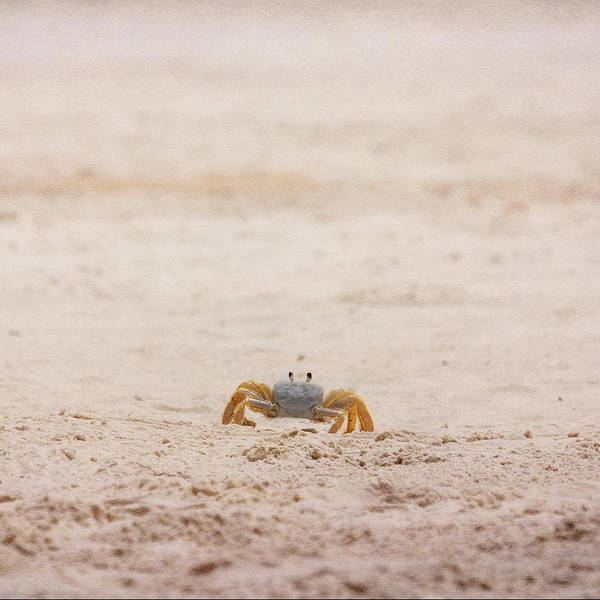 Photograph - Ninja Crab by Judy Hall-Folde