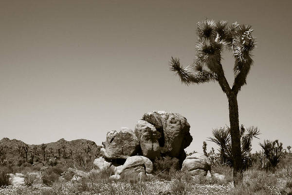 Photograph - Joshua Tree National Park Landscape No 4 In Sepia  by Ben and Raisa Gertsberg