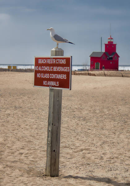 Holland State Park Photograph - No Animals by John Crothers