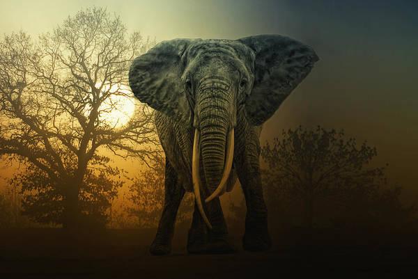 African Elephant Photograph - No Bull In A China Shop by Joachim G Pinkawa