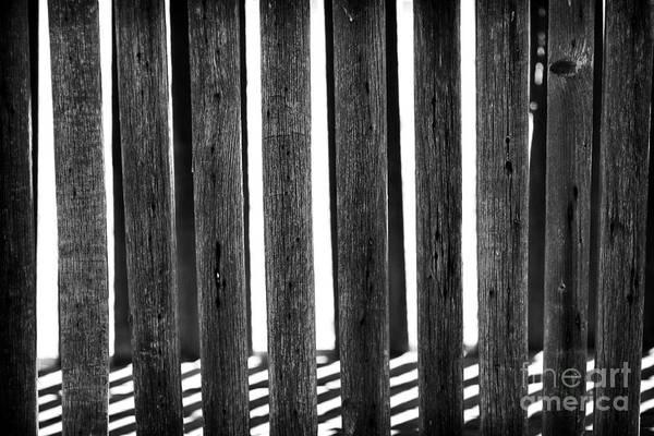 Photograph - No Escaping by John Rizzuto