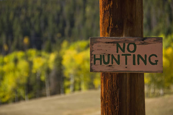Photograph - No Hunting by Angelina Tamez