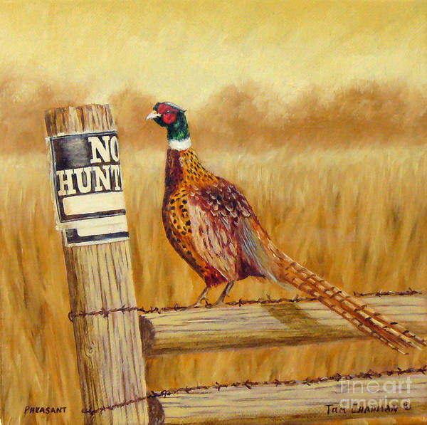 Pheasant Painting - No Hunting   Pheasant by Tom Chapman