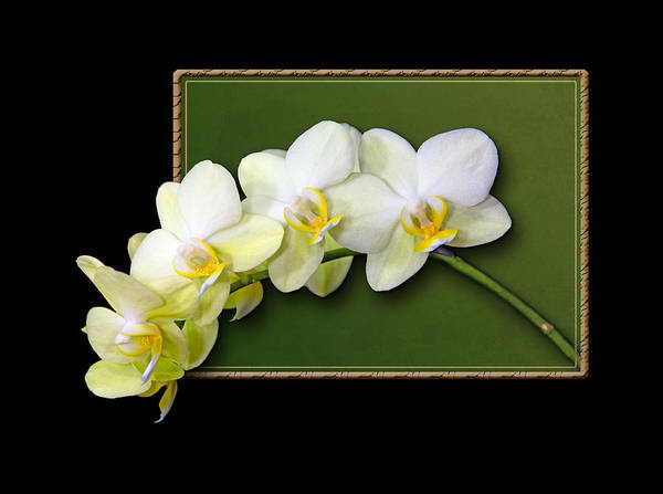 Photograph - Pale Yellow Orchid Frame by Patti Deters