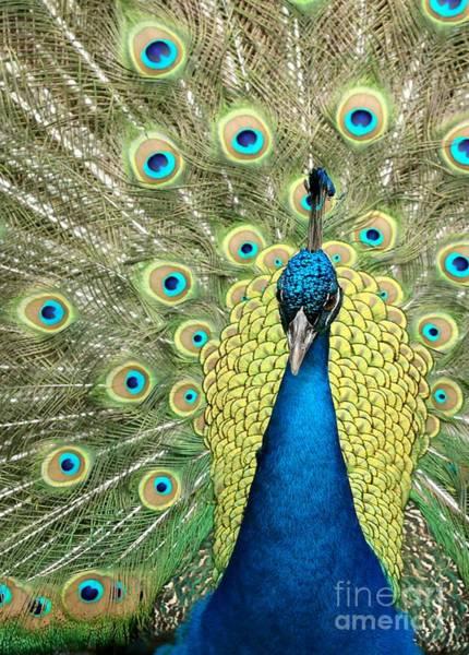 Photograph - Noble Peacock by Sabrina L Ryan