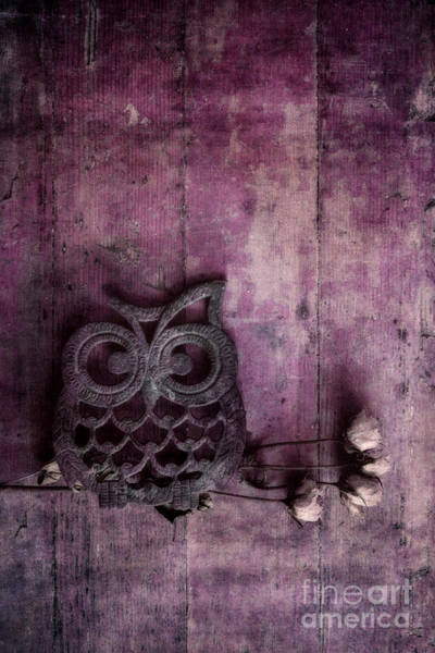 Owl Wall Art - Photograph - Nocturnal In Pink by Priska Wettstein