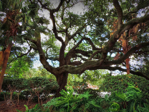 Photograph - Nola - Treme - Congo Square 002 by Lance Vaughn