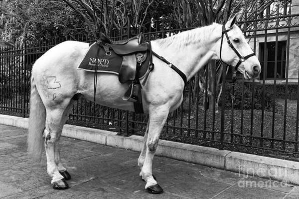 Photograph - Nopd Horse Mono by John Rizzuto