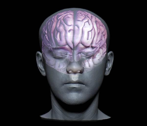 Normal Brain Art Print by Zephyr