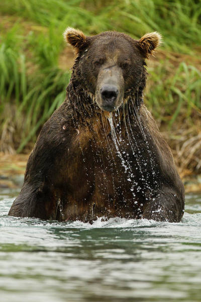 Chase Photograph - North America, Usa, Sw Alaska by Joe and Mary Ann Mcdonald
