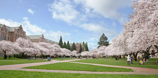 University Of Washington Wall Art - Photograph - North America, Usa, Washington, Seattle by Charles Sleicher