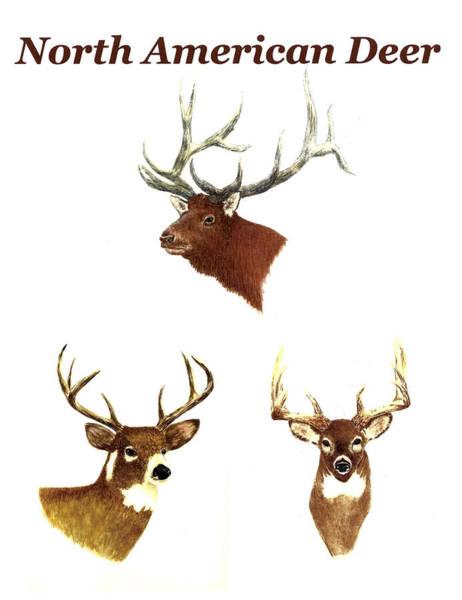 Wall Art - Painting - North American Deer by Michael Vigliotti