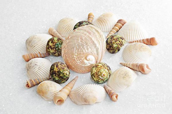 Photograph - North Carolina Circle Of Sea Shells by Andee Design