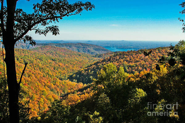 Photograph - North Carolina Fall Foliage by Ronald Lutz