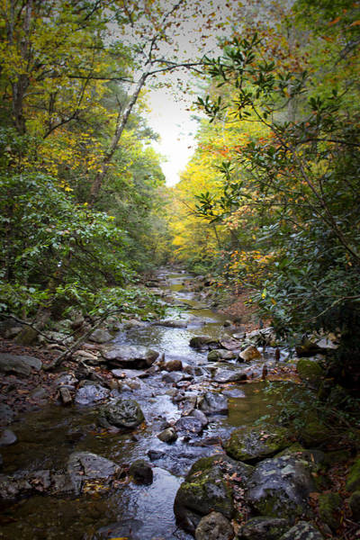 Photograph - North Carolina Typical by Ben Shields