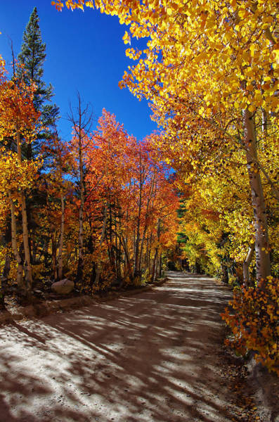 Bishop Photograph - North Lake Road Fall Colors by Scott McGuire